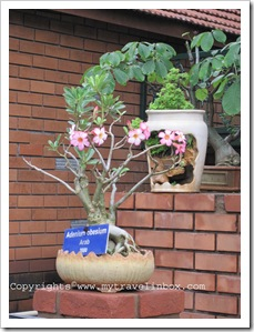 Bonsai Garden - flowered